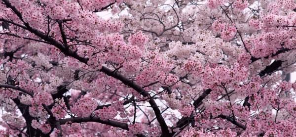 flores-de-bach-que-son