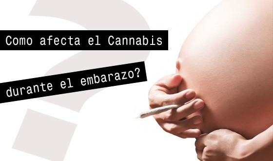 fumar-marihuana-durante-el-embarazo-dana-el-cerebro-del-feto-1