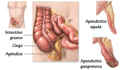 funcion-del-apendice