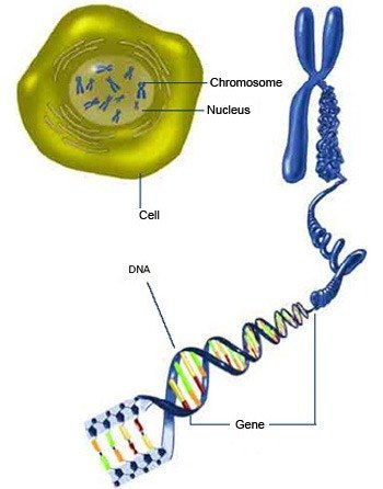 Trabajos Cmcd Actividades Genoma Humano