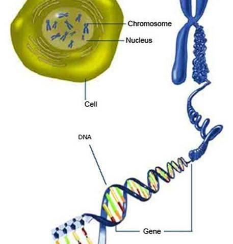 Riesgo Arteriosclerosis | depende comportamiento gen ARF