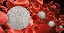 Glóbulos blancos – Qué son, funciones, valores y enfermedades asociadas