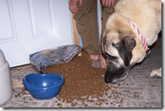 ¿Qué pasa si comemos comida para perro?