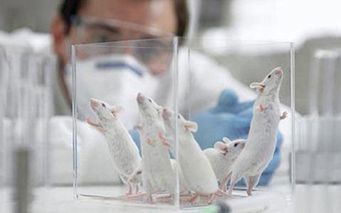 Posible tratamiento para el Parkinson, el Alzheimer y la esclerosis múltiple en una sola pastilla