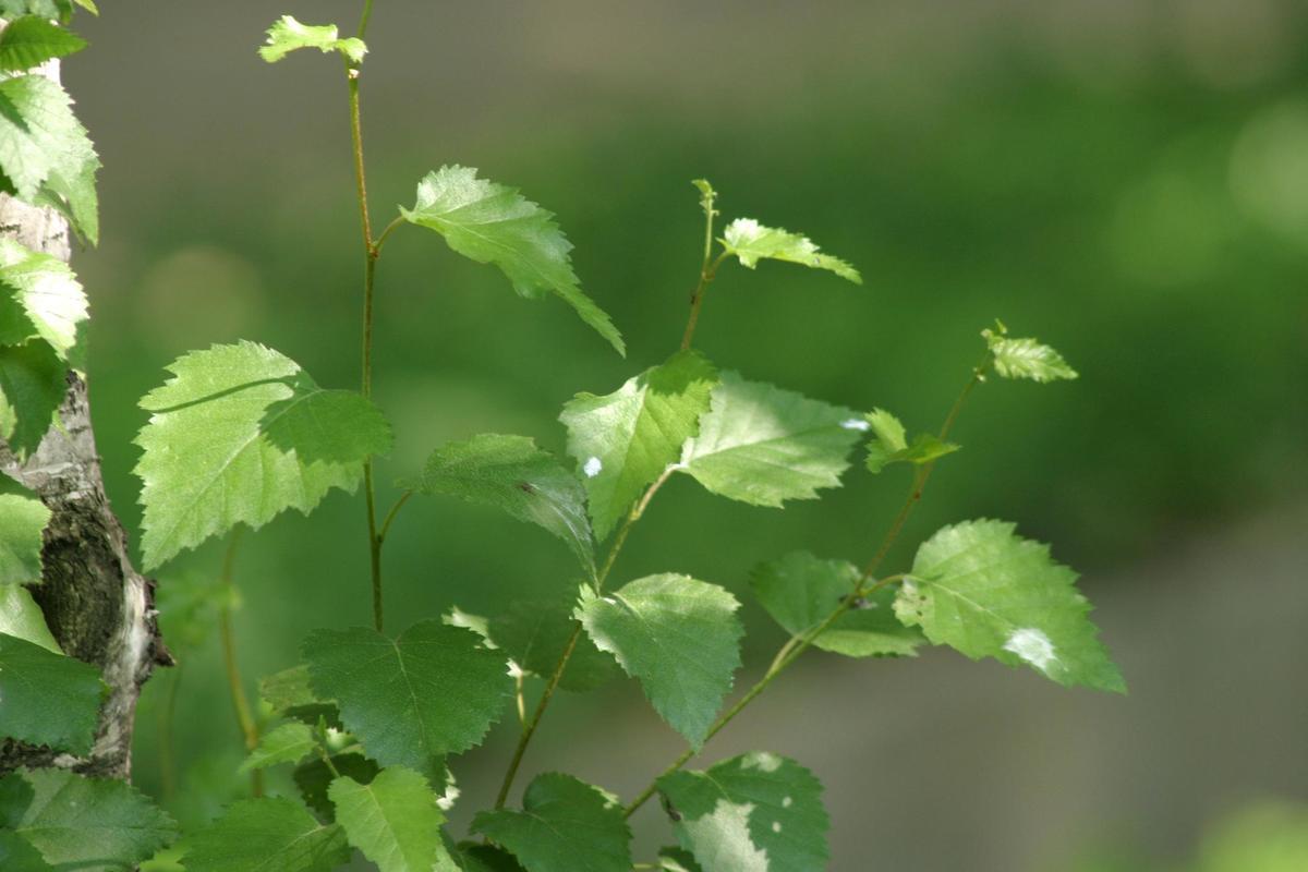 las-230-plantas-medicinales-mas-efectivas-y-sus-usos
