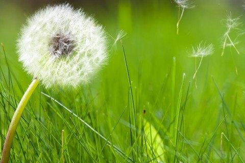 las-pruebas-alergia-de-primavera