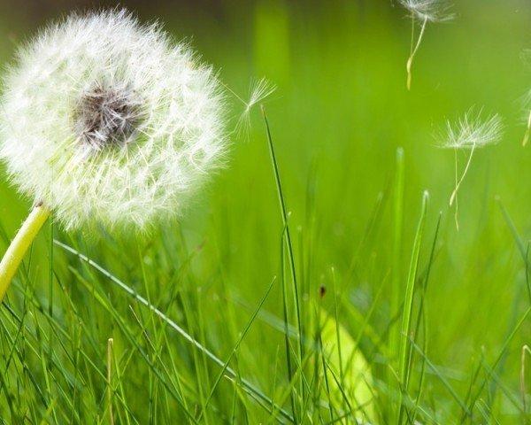 Las pruebas alergia de primavera