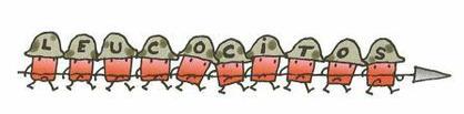 leucocitos-en-la-orina-positivo-que-significa-defensa