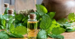 La planta medicinal Melisa: que es, propiedades, beneficios, cuidados y contraindicaciones