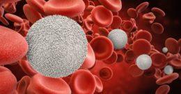 Neutrófilos – Qué son, funciones, valores, síntomas y tratamiento