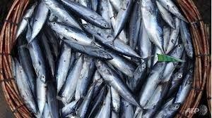 pescado-azul