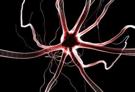 phototake_rf_photo_of_neurons
