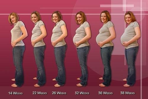 Etapas del embarazo - Demedicina.com