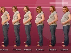 Etapas del embarazo