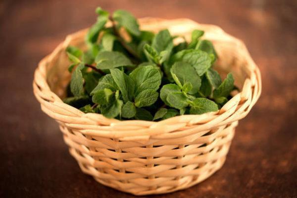Que es la menta beneficios propiedades de esta planta