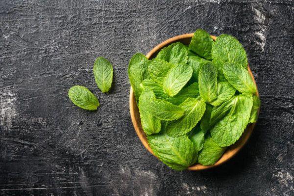Que es la menta beneficios propiedades de esta planta.