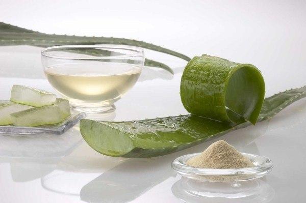 remedios-para-prevenir-la-alergia-aloe-vera