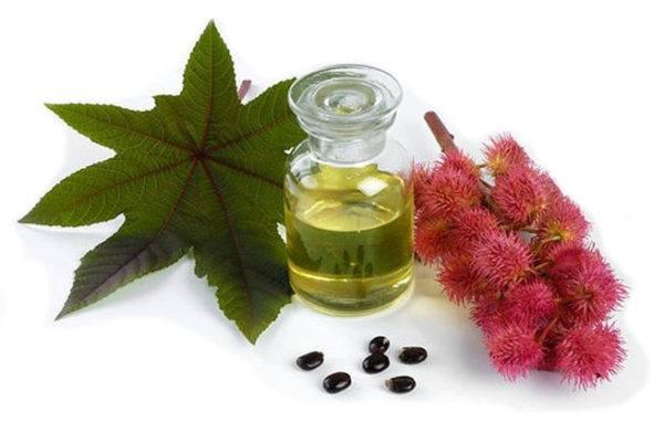 ricinus-communis-para-la-homeopatia-aceite-de-ricinio