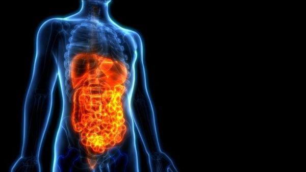 Sistema digestivo funcionamiento partes y enfermedades dolor