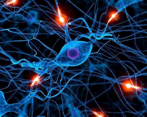 sistema nervioso simpatico-sns