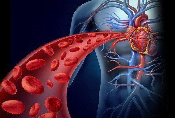 trigliceridos-bajos-hipotrigliceridemia