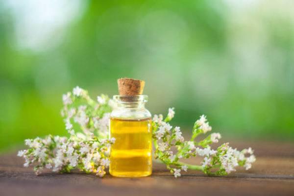 Valeriana propiedades beneficios efectos secundarios