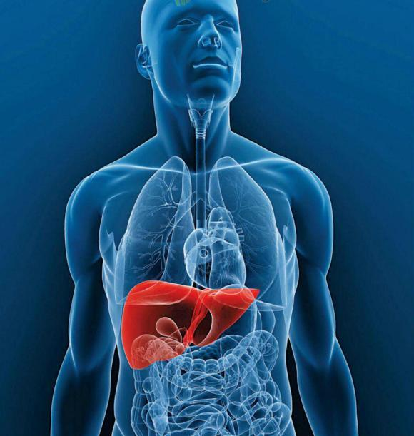 yemas-higado-aplicacion-transplantes
